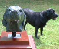 A female labrador bust sculpture - click for larger image